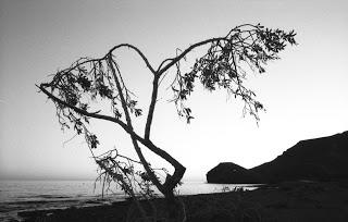 Rechteckiges von der Insel